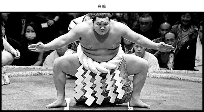 sumo-01